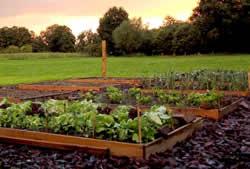 Bij Dordrecht geen groenten uit tuin eten wegens GenX en PFOA