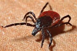Tekenbeet, gestoken door insect of aanraking berenklauw, weet je wat je moet doen?