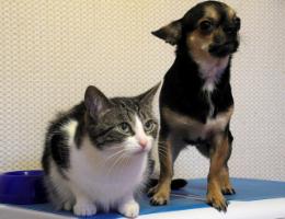 Huisdieren en corona covid19 * honden, katten, hamsters, fretten en konijnen