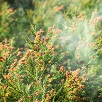 Allergievriendelijke planten – heb je ook last van pollen?